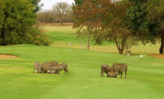 Aha Sefapane Lodge and Safaris: golfen