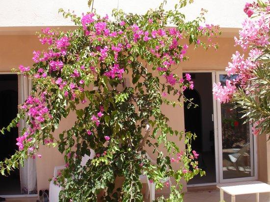 Hotel Djerba Les Dunes: Devant de chambre en RdeC