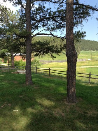 Madison Ranch - Bed and Breakfast : Looking inot time
