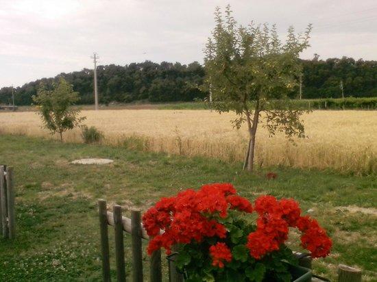Agriturismo ai Ciliegi: panorama