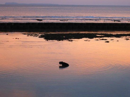The Natia: Fisherman during Sunset