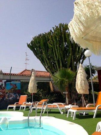 Beach Boys Resort: Pool