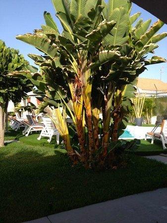 Beach Boys Resort: Pflanzen