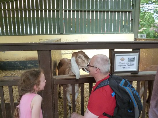 Rare Breeds Centre: Getting friendly with a goat!
