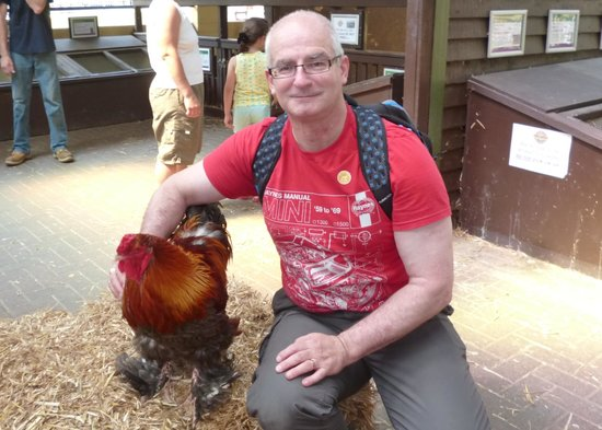 Rare Breeds Centre: Oscar the rooster, a handsome chap