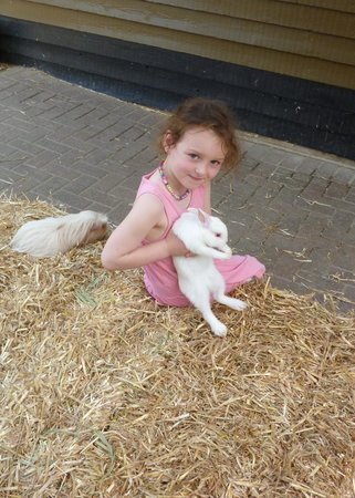 Rare Breeds Centre: Please granddad can I take him home?