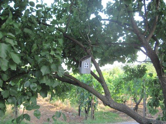 Locanda Il Fornello : Un nido sull'albero