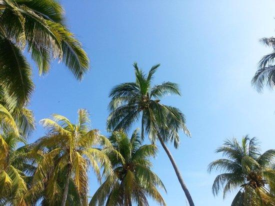Villa del Sol Resort: Harvesting coconuts