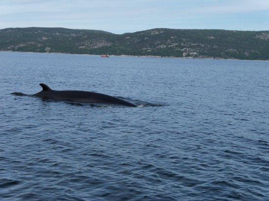Groupe Dufour Cruises : le rorqual curieux qu'il s'es approché très près du bateau