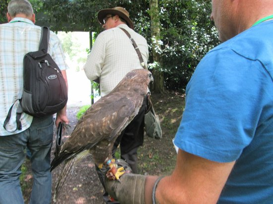 Cheshire Falconry: One of the birds