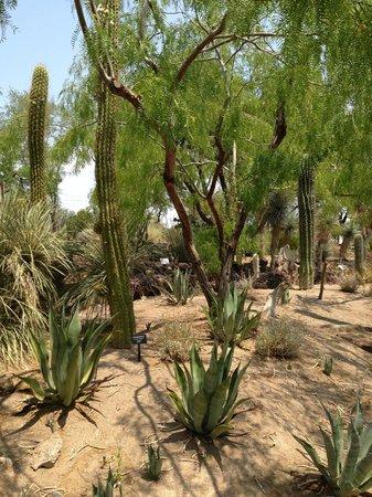 Ethel M Chocolates Factory And Cactus Garden: Botanical Cactus Garden