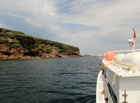 Donelda's Puffin Boat Tours : approaching bird islands