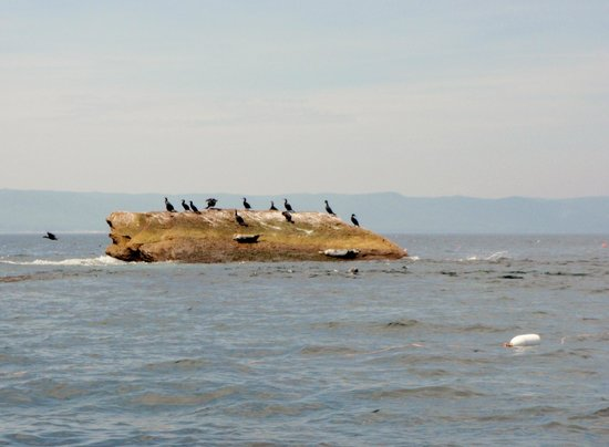 Donelda's Puffin Boat Tours: en route