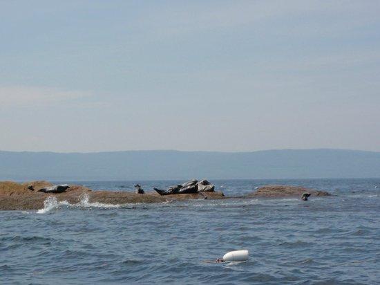 Donelda's Puffin Boat Tours : pretty scenery!
