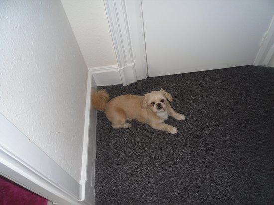 Ossian's Hotel: the dog