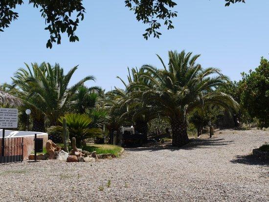 Hotel Il Castello: Palmengarten