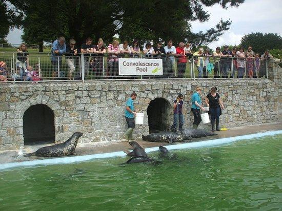 Cornish Seal Sanctuary: Feeding time