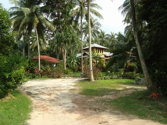 Silent Palm Taling Ngam: Вид на Тихие Пальмы