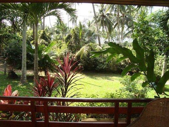 Silent Palm Taling Ngam: Вид с веранды