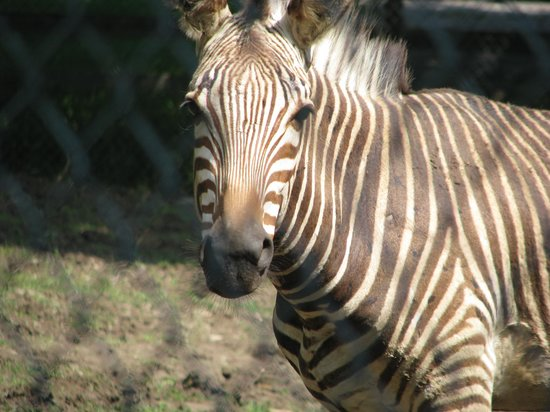 More Pictures at the Utica Zoo.