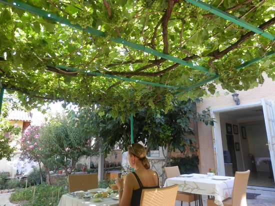 Villa Tulipan: Breakfast on the veranda covered with grapevines