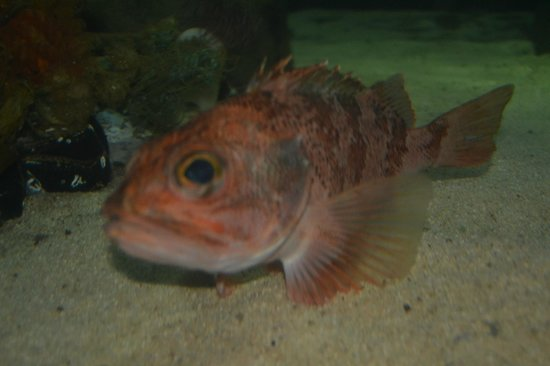 Dingle Oceanworld: Close-up View Of Your Favorite Species
