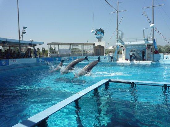 Rimini Dolphinarium 사진