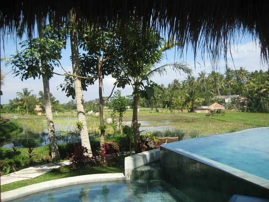 Mathis Retreat: View of pool and countryside from thatched sala