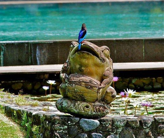 The Chedi Club Tanah Gajah, Ubud, Bali – a GHM hotel : Gorgeous Lotus Ponds attract beautiful birds & butterflies