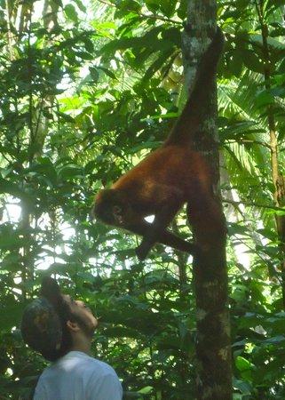 Osa Wildlife Sanctuary: Spider Monkey