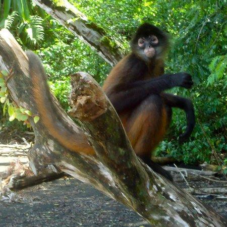 Osa Wildlife Sanctuary: Ham