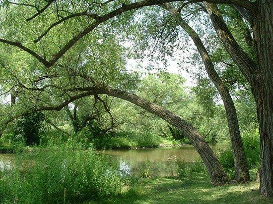 Fairy Lake Park