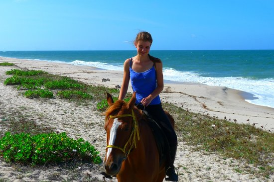 Changani Beach Cottages: Horse on the beach