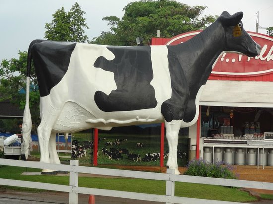 Farm Chokchai: The concrete cow