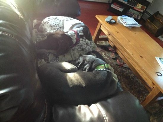 The Painted Dog: Pups sleeping on the couch in the living room