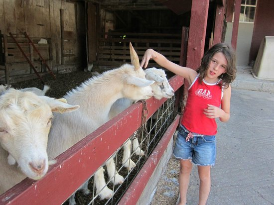 Country Log House Farm Bed and Breakfast: Petting the animals.