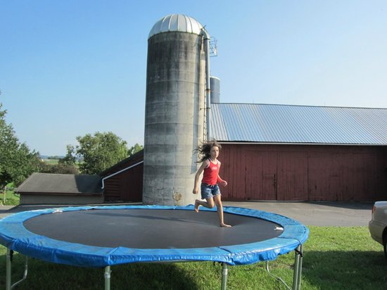 Country Log House Farm Bed and Breakfast: There's even a trampoline.