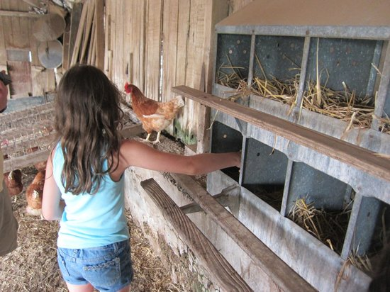 Country Log House Farm Bed and Breakfast: Collecting eggs.