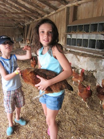 Country Log House Farm Bed and Breakfast: Holding a hen.