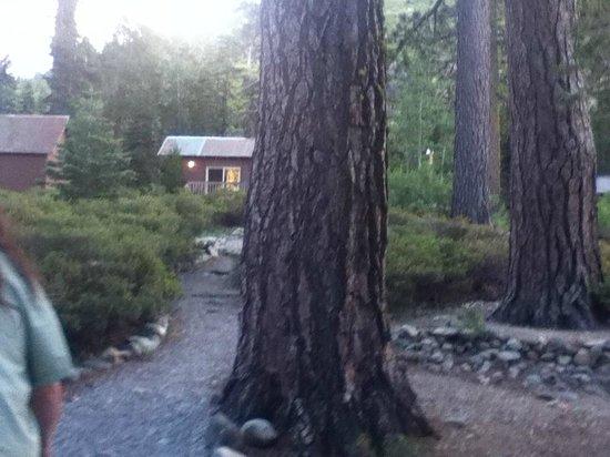 Gray Eagle Lodge : cabins