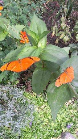 Sarett Nature Center: Butterfly house.