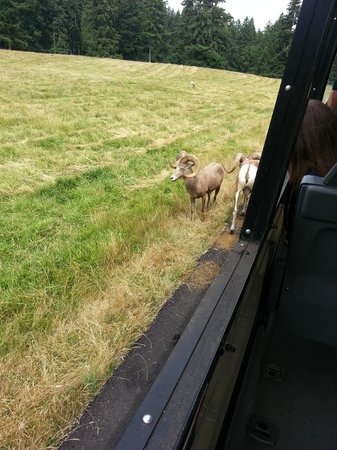 Northwest Trek Wildlife Park: Tram Tour