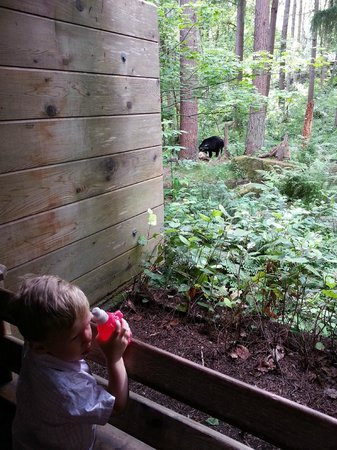 Northwest Trek Wildlife Park: Walking Exhibit