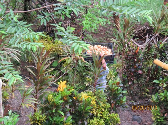 Copa de Arbol Beach and Rainforest Resort : Resort getting supplies
