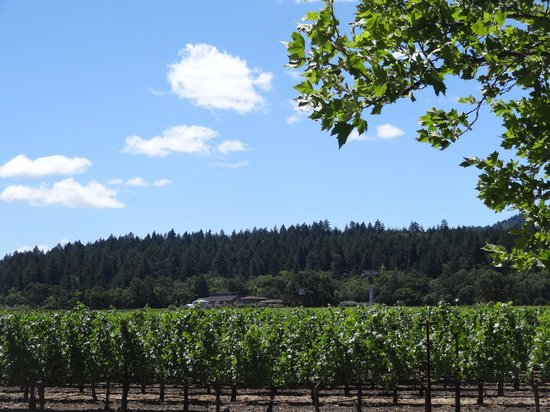 Reserve Wine Tours - Private Tours: Terraces on a gorgeous day