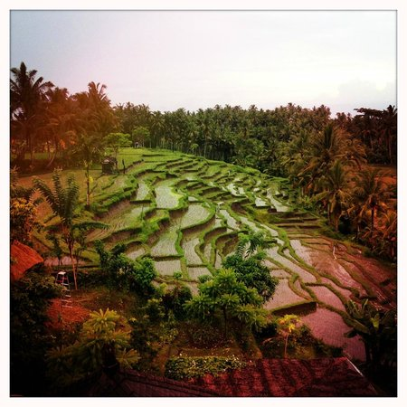 soulshine bali: View from the yoga studio