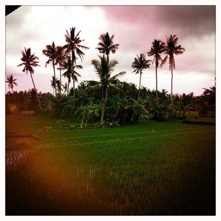 Soulshine Bali: Rice paddies