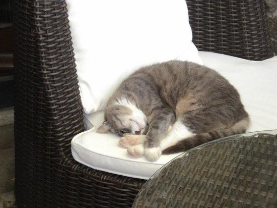 Agriturismo La Bell'Antiglia: Gattino