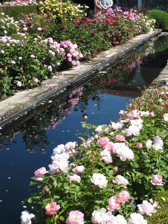 Вулверхэмптон, UK: Rose lined pool