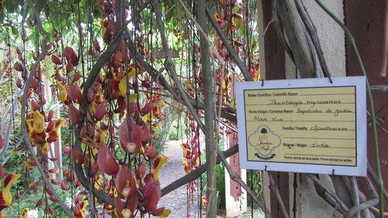 Quinta Jardins do Lago: Diverse bloemen en plantensoorten.